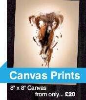 Canvas printing and design, canvas prints, canvas printing, premium canvas prints